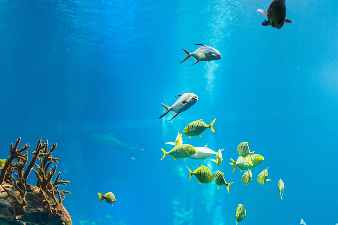 Canva - Ray, Fish, Water, Ocean, Sea, Nature, Blue